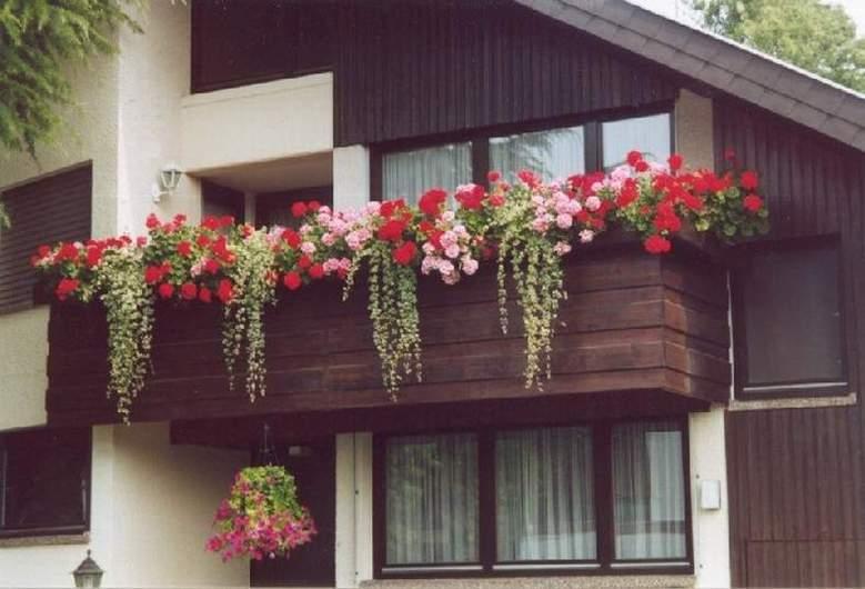 ich suche rat in sachen balkonk stenbepflanzung tipps tricks green24 hilfe pflege bilder. Black Bedroom Furniture Sets. Home Design Ideas
